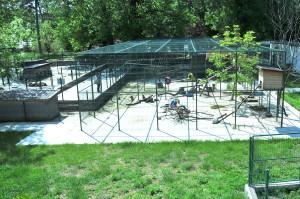 Zoo parc (4)