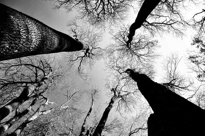Foto: Jianu Liviu
