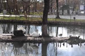 Parcul Nicolae Romanescu
